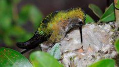 Beija-flor   Foto: Zé Henrique