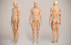 ArtStation - Human Anatomy, Aleksandrs K Arm Anatomy, Muscle Anatomy, Anatomy Study, Body Anatomy, Anatomy Art, Figure Drawing Reference, Body Reference, Anatomy Reference, Simple Tats