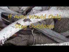 Getting rid of ants: boric acid or borax?