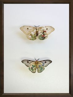 Akihiro Higuchi 樋口 明宏 watercolor on moth