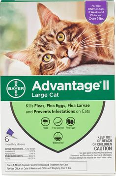 Advantage Ii For Cats 6 Pk Cats Over 9 Lbs Purple Fleas Cats Cat Fleas