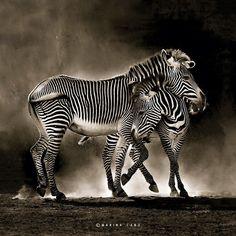 FOTOSERIE: Wilde dieren in hun element