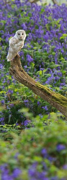 The owl and the branch and lavender all around. Lovely !