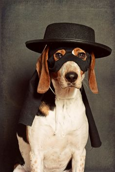 "Zorro ~ by Paguma   (Best part about this pic is the beagle's expression: ""I get a treat for this, right? You promised."""
