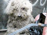 Blind Dog Living in a Trash Pile Gets Rescued ... Fiona. I get so emotional with stories like this.