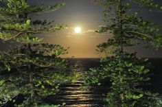 Moonlight through the Pines Manly Beach Australia, Pretty Pictures, Pretty Pics, Sun Moon Stars, Over The Moon, Wonderful Time, The Great Outdoors, Magick, Moonlight