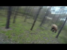 It was a usual day, I decided tо cycle in the forest and to record my walk on the Gopro. To my great surprise, I met a bear, which hardly наброситься on me. ...