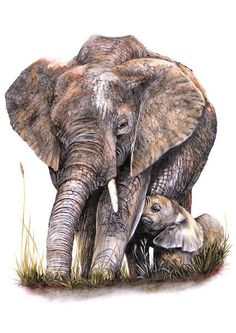 Image result for Watercolour paintings - natural elephants
