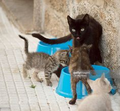 cat family eating in a blue trough at street