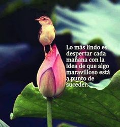 Hagamos de la Metafísica una forma de Vida: Good Morning Good Night, Good Morning Quotes, Poem Memes, Good Sentences, Morning Greetings Quotes, Morning Messages, Love Images, Spanish Quotes, Happy Thoughts
