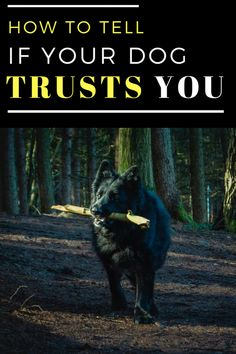 The level of love and trust you feel toward your dog is no different than what you feel toward any other family member. But is the feeling mutual? Here's how to tell if your dog trusts you. Dog Grooming Tips, Dogs Trust, Trust Yourself, Dog Owners, How To Know, To Tell, Animals And Pets, Dogs And Puppies, How Are You Feeling