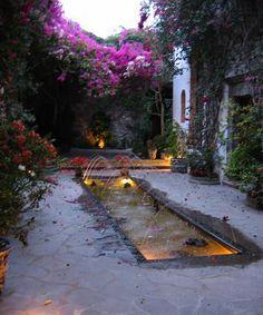 Garden from San Miguel de Allende, Mexico