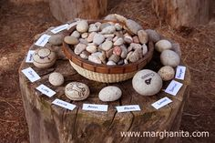 find a pebble/rock decorate (artline markers) and to be used as a check everyone is present?