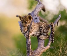 Another cute baby animal :-)