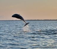 tips for spotting dolphins here along 30A...