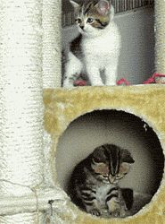 7 Best Cat Gifs of the Week – 22nd August 2015