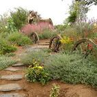 Backyard Desert Landscaping Design, Pictures, Remodel, Decor and Ideas - page 7