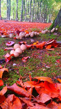 Mushrooms on an autumn forest floor