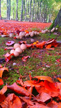 Mushrooms on an autumn forest floor
