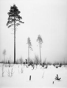 Modern landscape by Kari-S