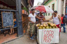 Tres usos del #coco en #Cuba http://www.cubanos.guru/tres-usos-del-coco-cuba/