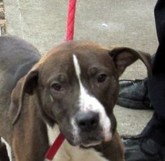 23 Adams Hound Mix • Young • Male • Large Stark County Dog Warden Department Canton, OH Needs a loving home asap!!