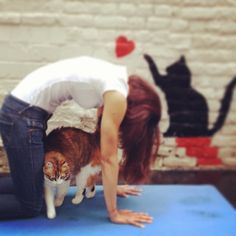 Loving Yoga & Cats!!!! Cat's Pose