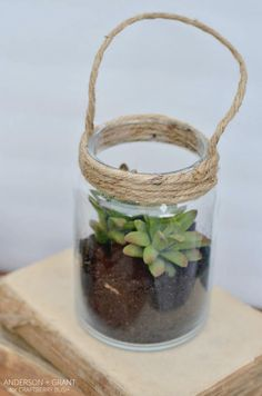 Make a glass lantern filled with succulents