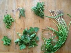 spring herbs - Google Search