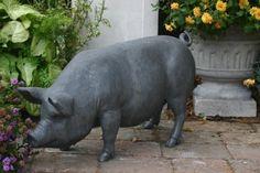 Pig - English Lead
