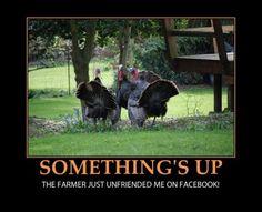 concerned turkeys