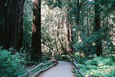 joslo:  Muir Woods California by xenerr on Flickr.