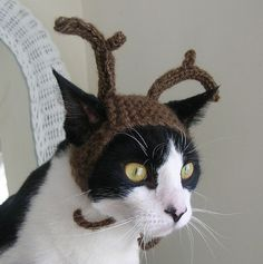 He Has Never Looked Angrier - 20 Photos of Cats Wearing Hats to Brighten Your Day