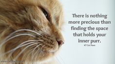 finding that space that holds your inner purr.  #cats #zen  www.catboxzen.com