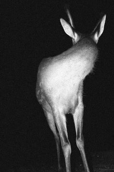 #photography #black #white #deer