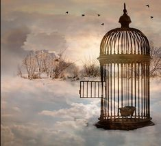 Blank Background, Background Images, Freedom Art, Arte Obscura, Come Fly With Me, Fantasy Drawings, Vintage Birds, Bird Cage, Taj Mahal