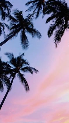 Palm Trees and Sky Moon Wallpaper 986