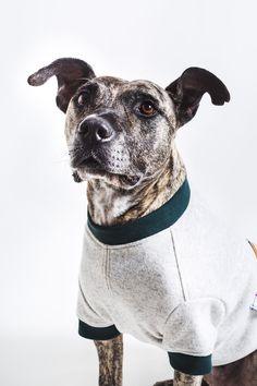 Hund: Bekleidung - Maßgeschneiderter Hunde Wollpulli Pullover Sweater - ein Designerstück von happystaffyme bei DaWanda