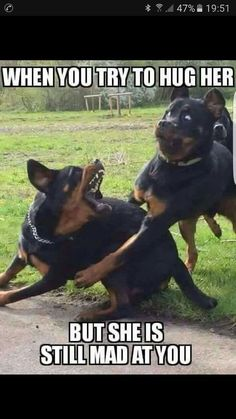Top 29 Funny Animal Memes Humour – Life Is Memes Funny Animal Jokes, Crazy Funny Memes, Really Funny Memes, Cute Funny Animals, Stupid Funny Memes, Funny Relatable Memes, Haha Funny, Funny Cute, Funny Stuff