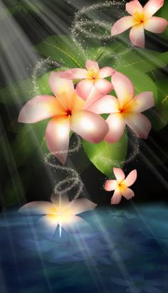 Hawaiian Flowers | Hawaiian delight picture for: hawaiian flowers photoshop contest ...