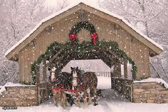 Beautiful Covered Bridge and a sleigh ride in the snow. Christmas Cover, Christmas Scenes, Noel Christmas, Country Christmas, All Things Christmas, Winter Christmas, Xmas, Cowboy Christmas, Winter Snow