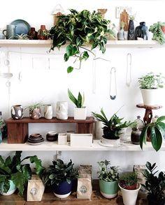 house plants galore!
