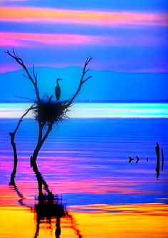 Tranquility, water, reflections, beauty of Nature Cool Pictures, Cool Photos, Beautiful Pictures, Beautiful Birds, Beautiful World, Beautiful Sunset, Amazing Photography, Nature Photography, Foto Poster