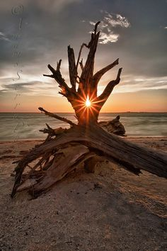 Photograph Sunstar by Adams Serra on 500px