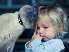 la complicité entre des bébés et des chats