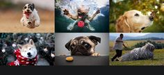 13 Jaw droppingly beautiful photos for dog lovers…