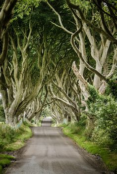 The dark hedges, Northern Ireland  Reminds me of Snow White going through the woods