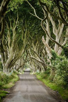 The dark hedges, Northern Ireland #HipmunkBL
