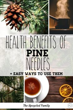Every wonder if you can use those pine trees out back for more than just shade or landscaping? Health benefits of pine needles + 4 easy ways to use them. What Is Turmeric, Turmeric Tea, Natural Medicine, Herbal Medicine, Natural Cures, Natural Health, Pomegranate Benefits, Apple Health Benefits, Pine Needles