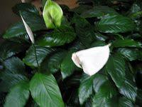Canto do Feng Shui: Feng Shui no Jardim: Plantas e Guás